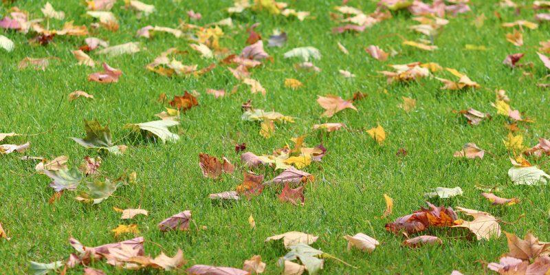 meadow-4508994_1920